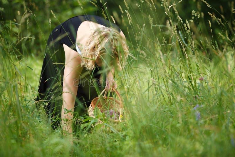 Femme sélectionnant le thé de fines herbes photographie stock libre de droits