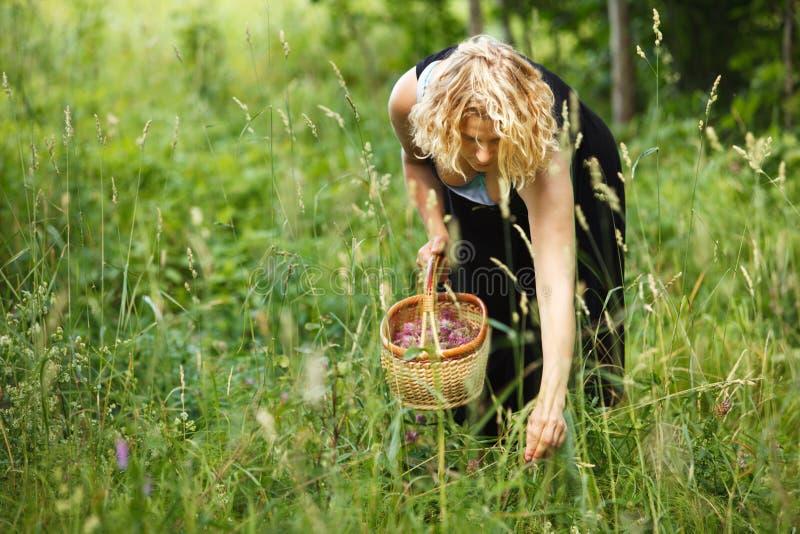 Femme sélectionnant le thé de fines herbes photos stock