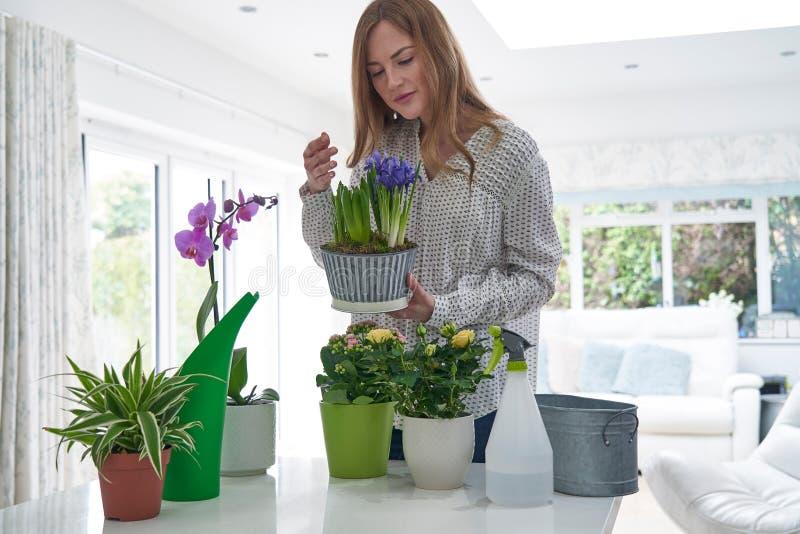 Femme s'inquiétant des plantes d'intérieur sentant des fleurs photos libres de droits