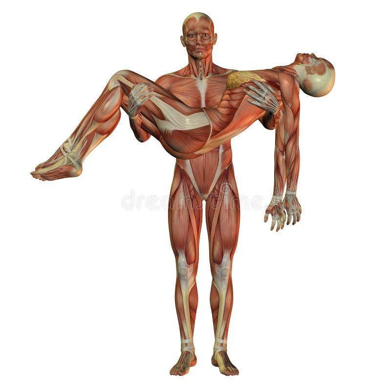 Femme s'usante d'homme humain de muscle illustration de vecteur