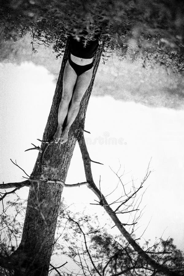 Femme se trouvant sur la terre mettant des jambes sur le tronc d'arbre photographie stock libre de droits
