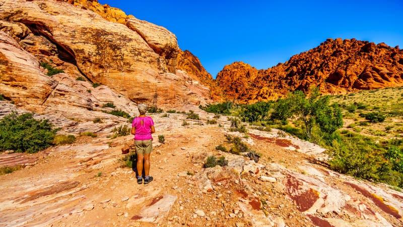 Femme supérieure appréciant la vue des roches colorées pendant une hausse dans la région nationale de conservation de canyon roug photos stock
