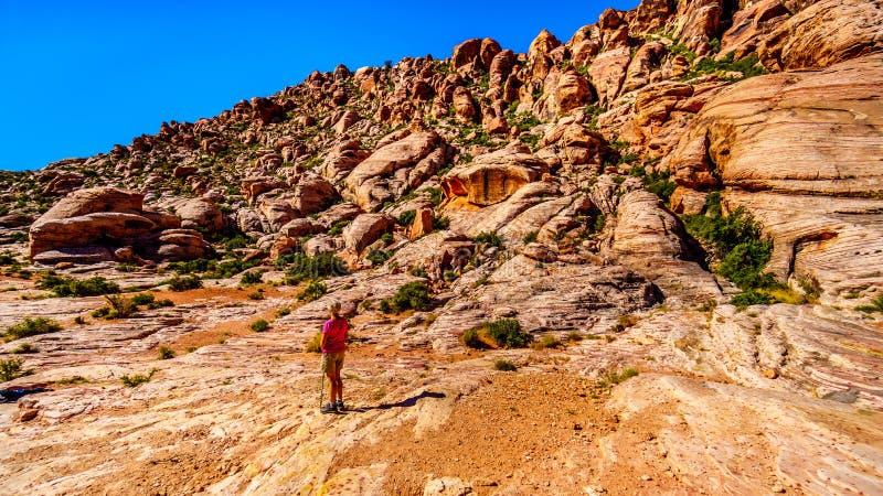 Femme supérieure appréciant la vue des roches colorées pendant une hausse dans la région nationale de conservation de canyon roug image libre de droits