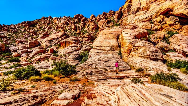 Femme supérieure appréciant la vue des roches colorées pendant une hausse dans la région nationale de conservation de canyon roug photographie stock libre de droits