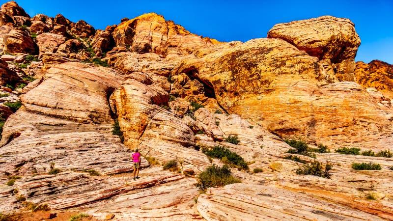 Femme supérieure appréciant la vue des roches colorées pendant une hausse dans la région nationale de conservation de canyon roug photos libres de droits