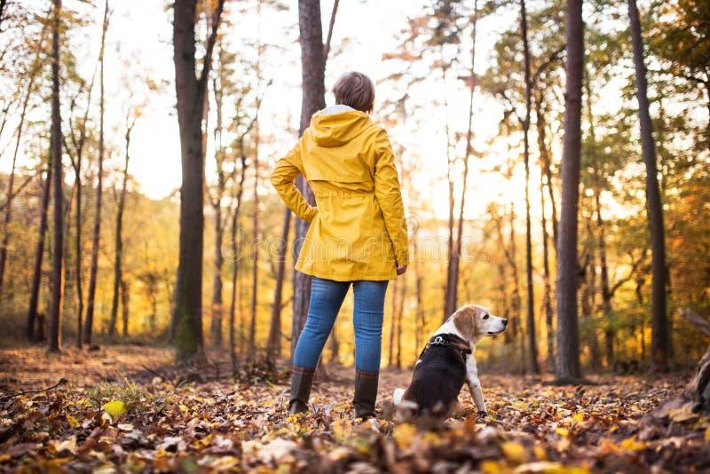 Femme supérieure avec le chien sur une promenade dans une forêt d'automne photos libres de droits