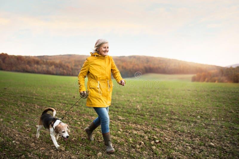 Femme supérieure avec le chien sur une promenade dans une nature d'automne photos libres de droits