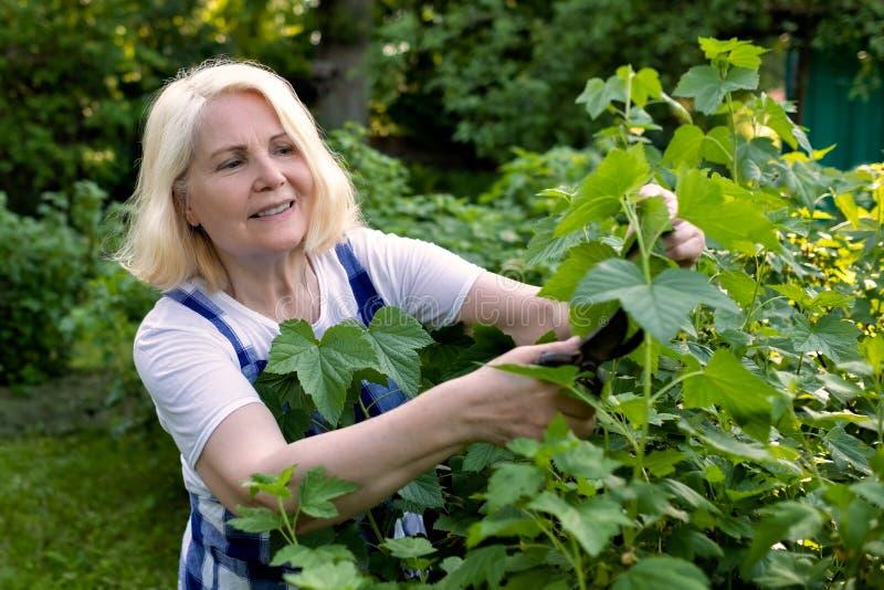 Femme supérieure coupant équilibrant des branches effectuant le travail de jardin images libres de droits