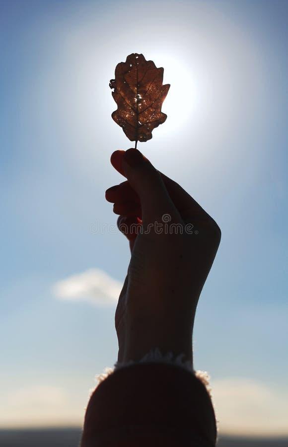Femme tenant la feuille sèche contre le soleil photographie stock