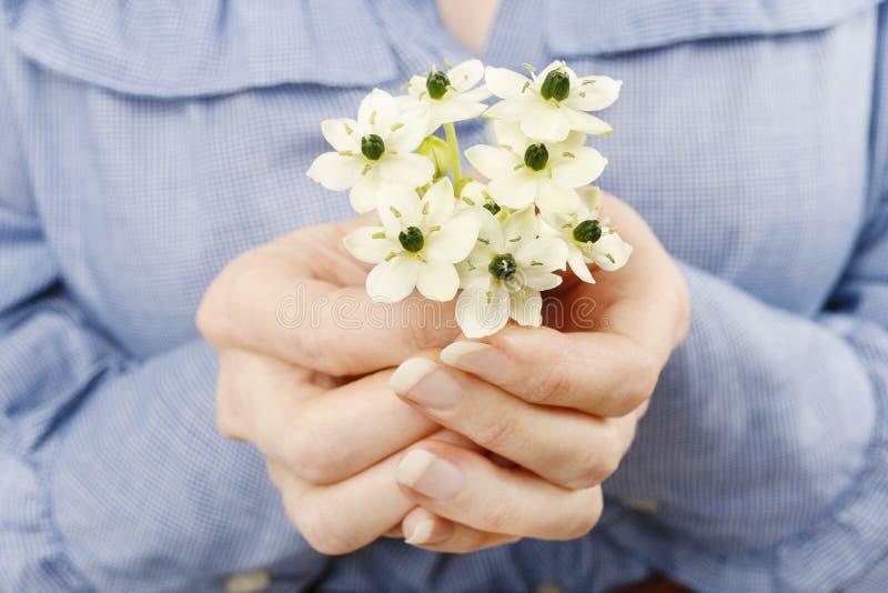 Femme tenant le bouquet des fleurs blanches minuscules (l'arabe d'ornithogalum photographie stock
