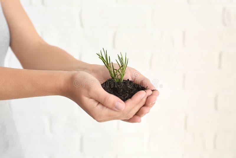 Femme tenant le sol avec la plante verte dans des mains sur le fond clair, plan rapproché Concept d'?cologie photographie stock libre de droits