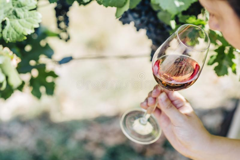 Femme tenant le verre de vin rouge dans le domaine de vignoble ?chantillon de vin dans l'?tablissement vinicole ext?rieur image libre de droits