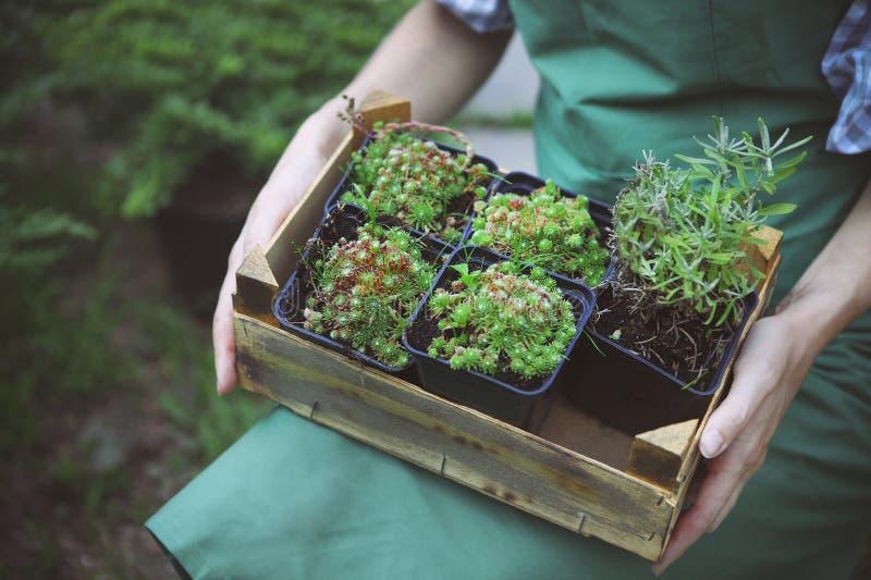 Femme tenant une boîte avec des usines dans des ses mains à la jardinerie photos stock