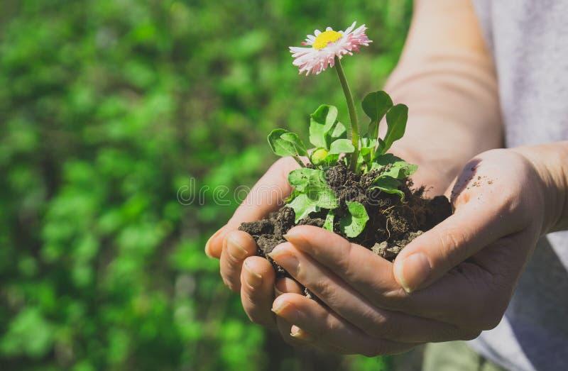 Femme tenant une fleur image libre de droits