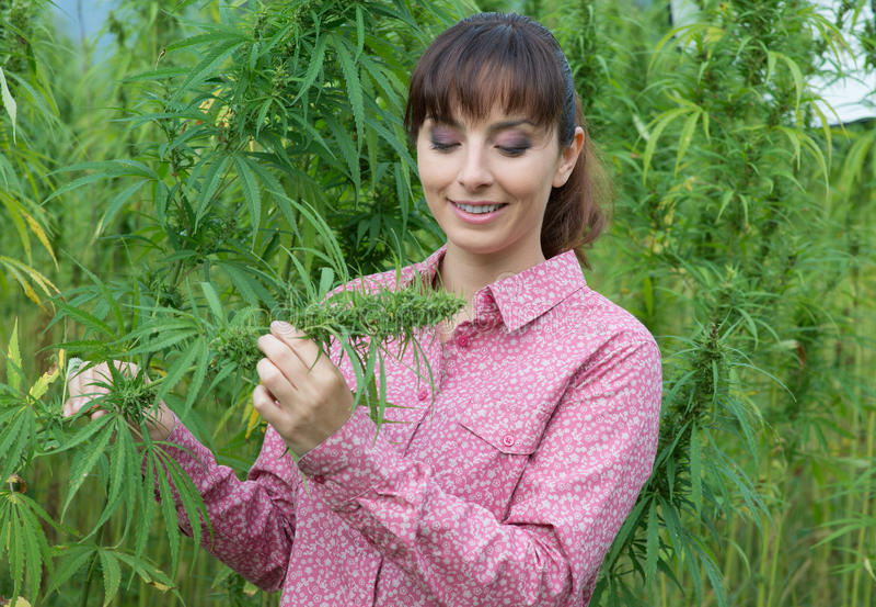 Femme tenant une fleur de chanvre image stock