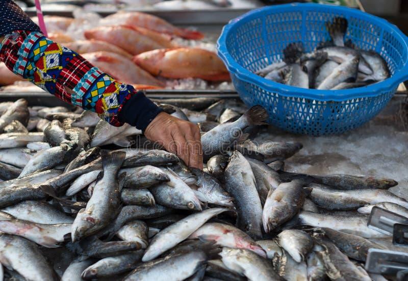 Femme thaïlandaise choisissant le poisson frais au marché local en Thaïlande images stock