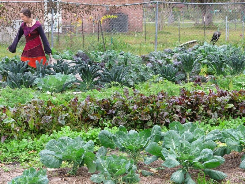 Femme travaillant à la ferme photos stock