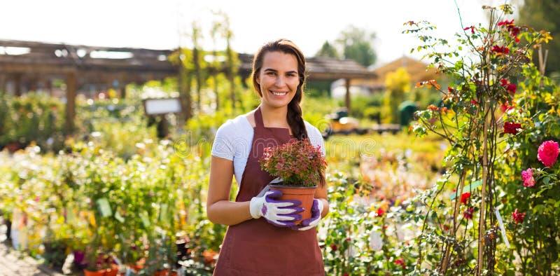 Femme travaillant à la jardinerie images libres de droits
