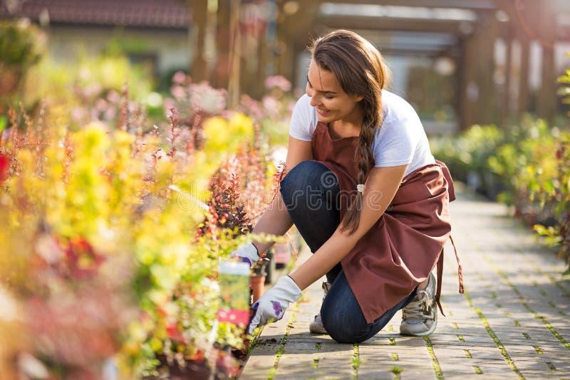 Femme travaillant à la jardinerie photos libres de droits