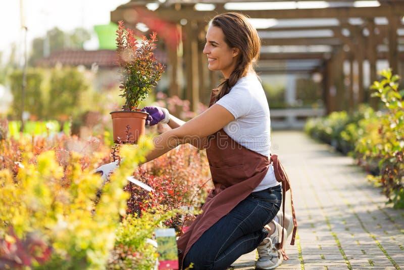 Femme travaillant à la jardinerie photos stock