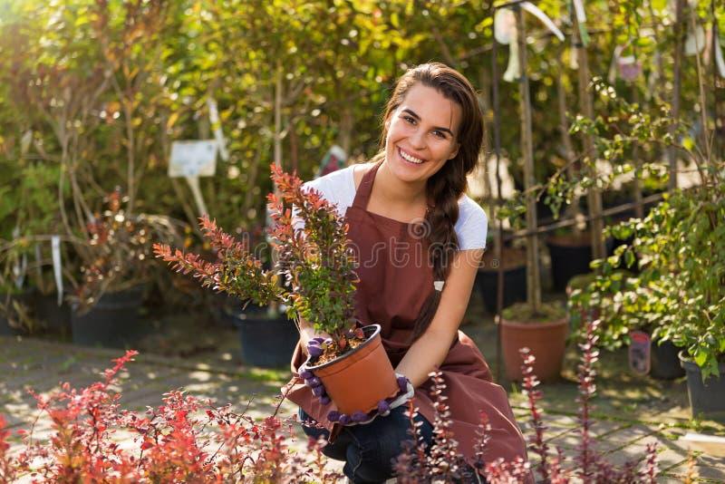Femme travaillant à la jardinerie images stock