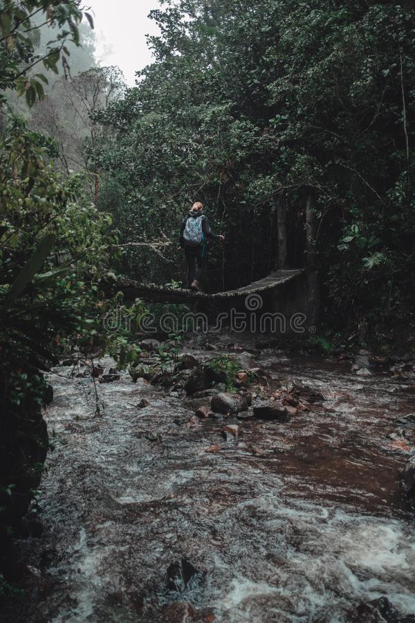 Femme trimardant au-dessus d'un pont dans la forêt tropicale photo libre de droits