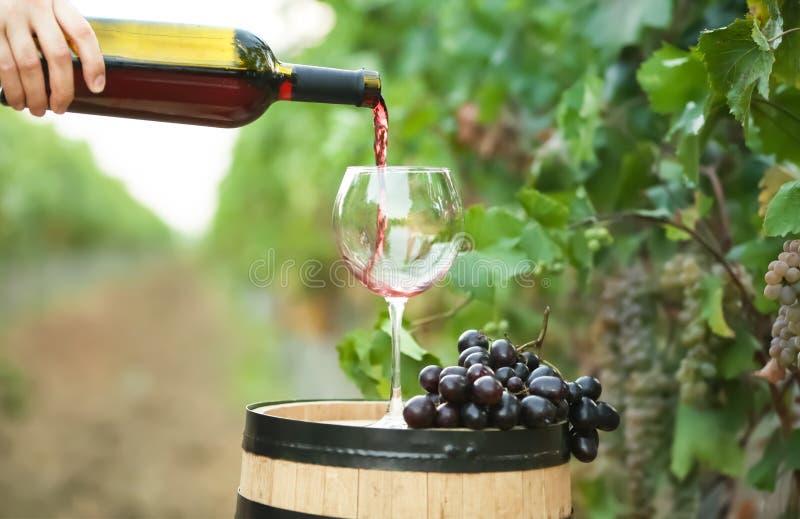 Femme versant le vin rouge dans le verre sur le baril photos libres de droits