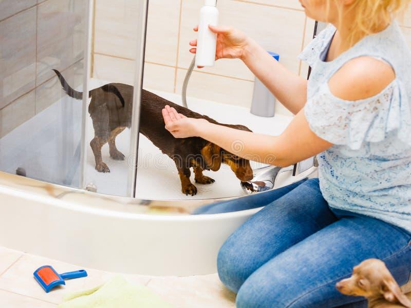 Femme versant son chien image libre de droits
