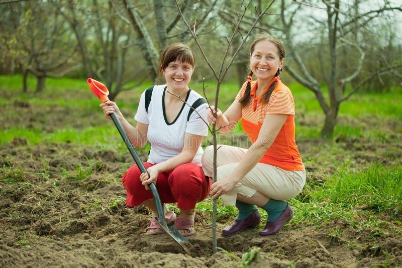 Femmes heureux plantant l'arbre fruitier images libres de droits