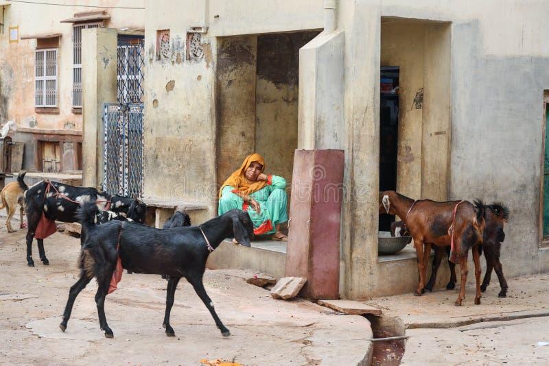 Femmes indiennes s'asseyant près de la maison Chèvres voisines sur la rue dans Bikaner Rajasthan l'Inde images libres de droits
