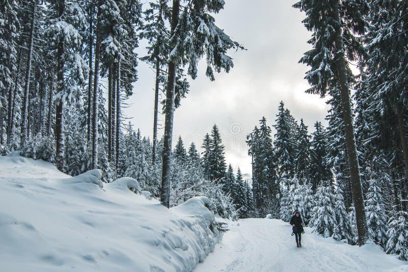 Femmes marchant dans la forêt dans l'horaire d'hiver couvert de neige blanche et d'habillement foncé de port image libre de droits