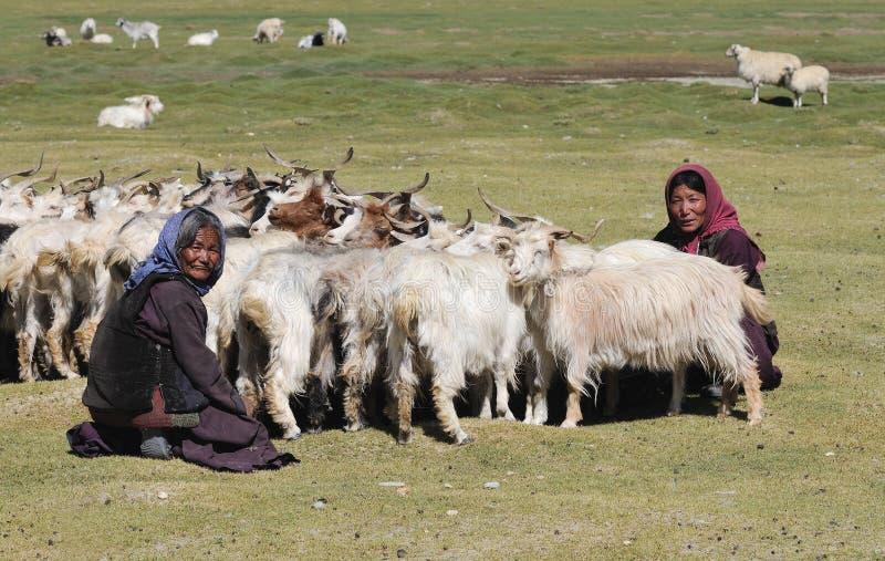 Femmes nomades de TSO Moriri photographie stock libre de droits