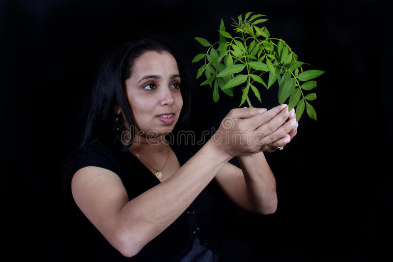 Femmes retenant une plante verte photo stock