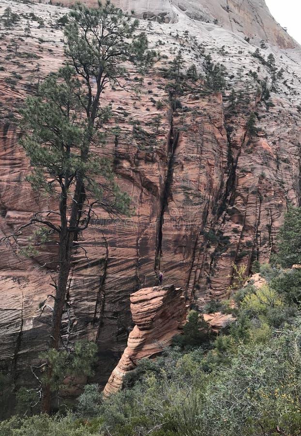 Femmes une position de femme sur Zion National Park image stock