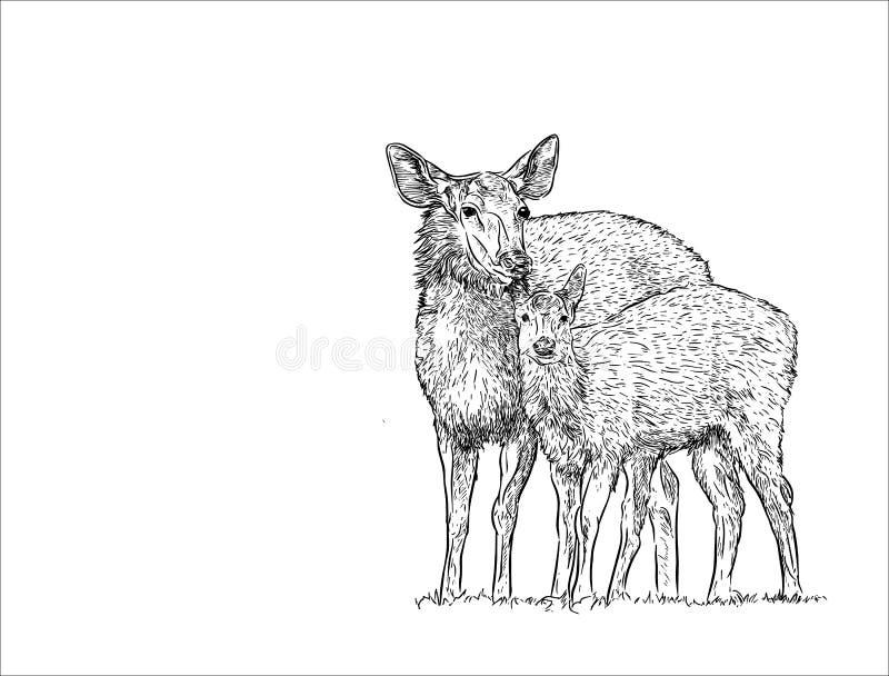 Femmina dei cervi con il bambino, vettore di schizzo di tiraggio della mano illustrazione vettoriale