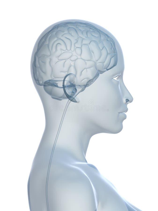 femmina del cervello royalty illustrazione gratis