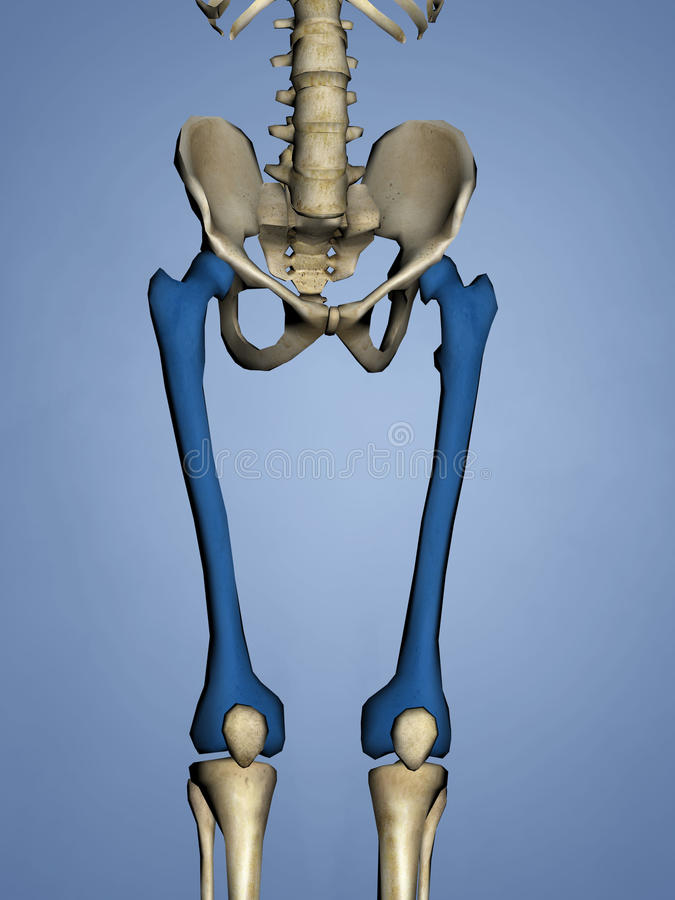 Femur, 3D Model royalty free stock photography