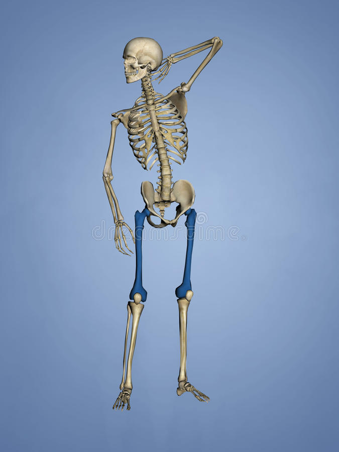 Femur, 3D Model stock photography