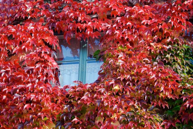 Fenêtre avec l'usine photos libres de droits