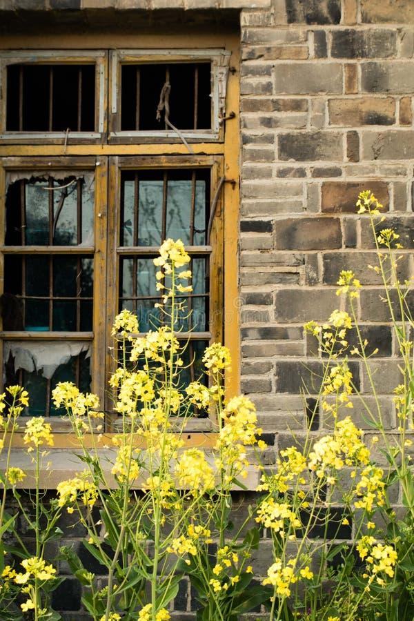 Fenêtre cassée, fleurs fraîches images libres de droits