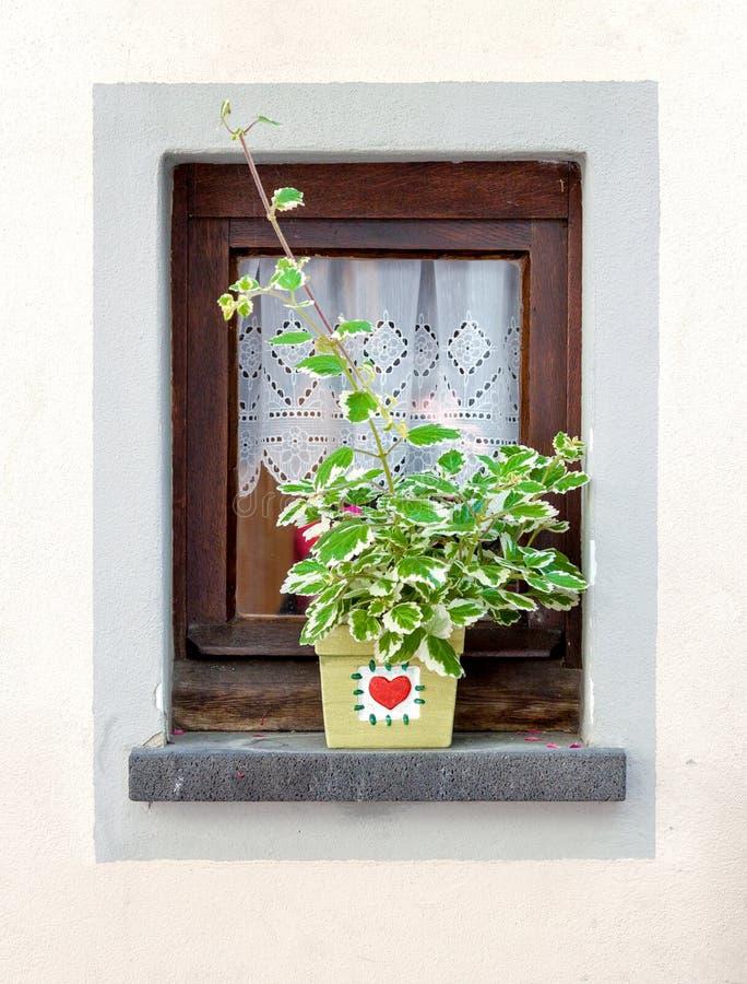 Fenêtre décorée du pot de fleur à l'été images stock