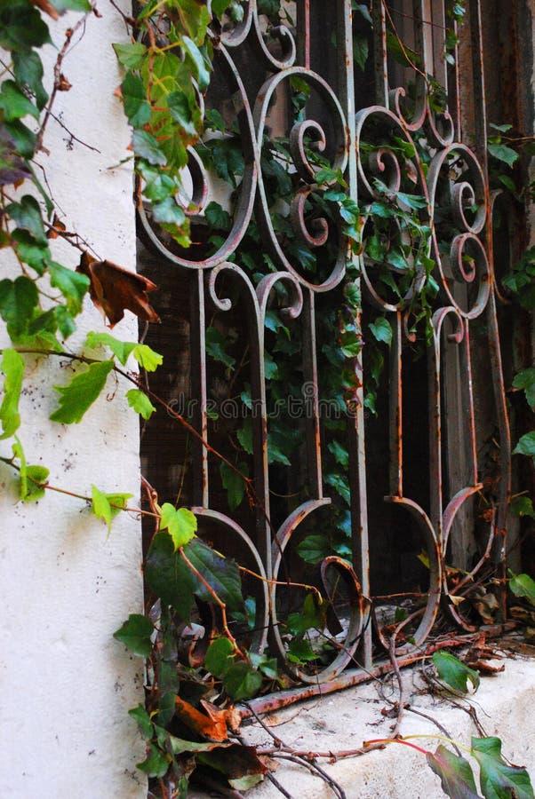 Fenêtre de fer avec des vignes image stock