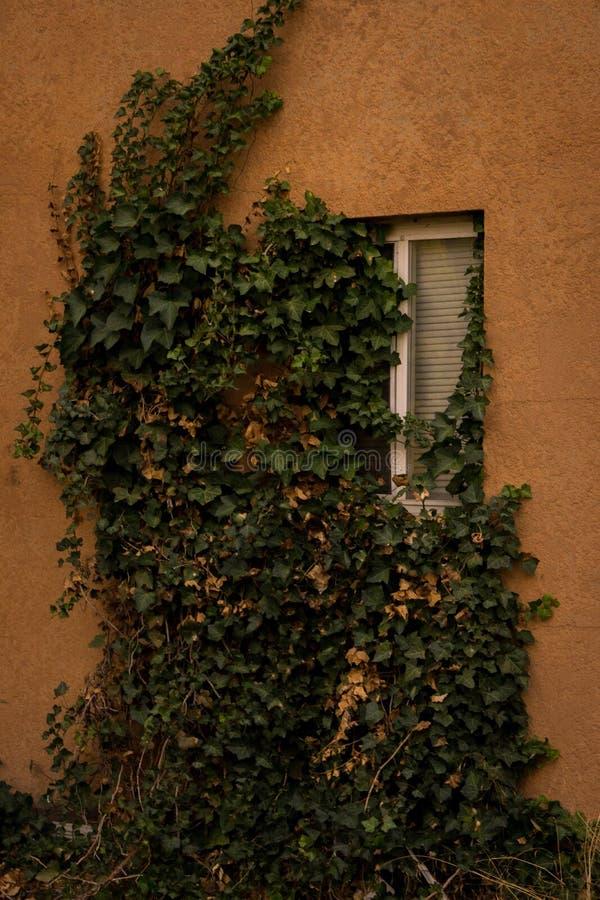 Fenêtre hantée de Chambre photo stock