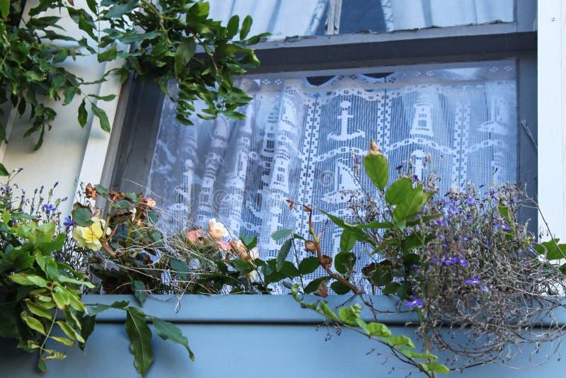 Fenêtre par la mer - regardant une fenêtre avec les curtians nautiques de dentelle dans la maison en bois avec le planteur de boî image libre de droits