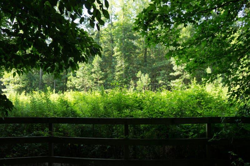 Fenêtre sur la verdure photos stock