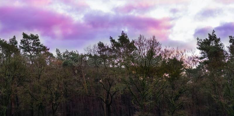 Fenómeno del tiempo en el cielo, el rosa y las nubes nacaradas púrpuras, fondo del paisaje del bosque fotos de archivo libres de regalías