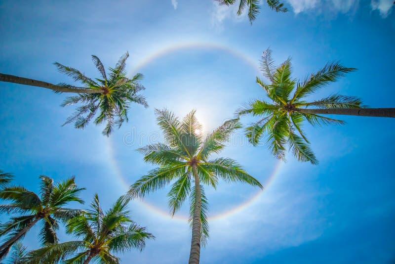 Fenômeno circular do halo do arco-íris de Sun imagens de stock