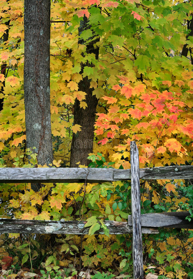 Fence In Autumn stock image