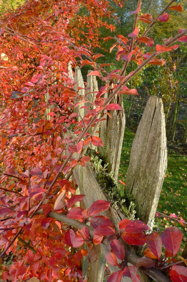 A fence in autumn colors stock photos