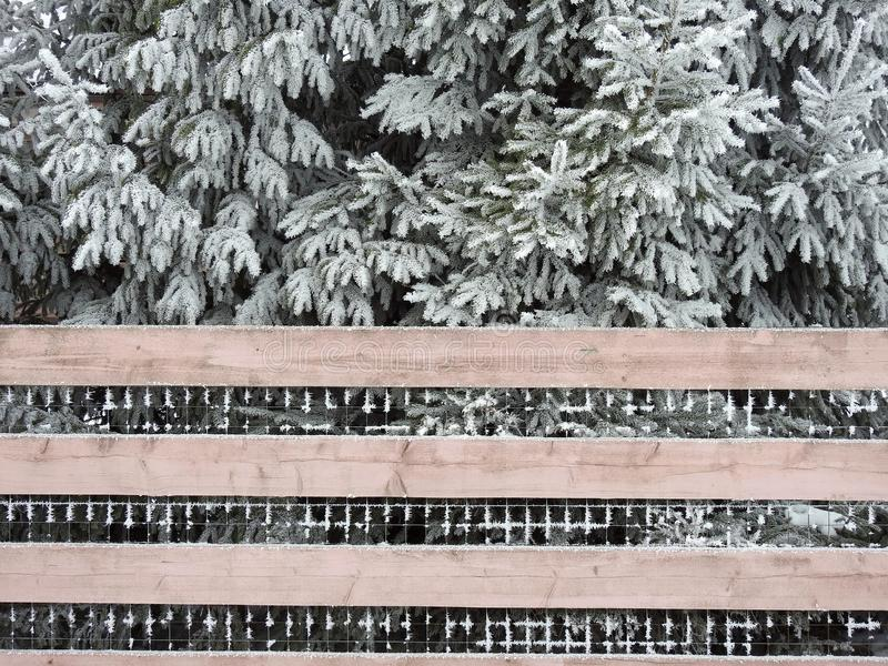 Fence and beautiful snow on tree branches, Lithuania stock photography